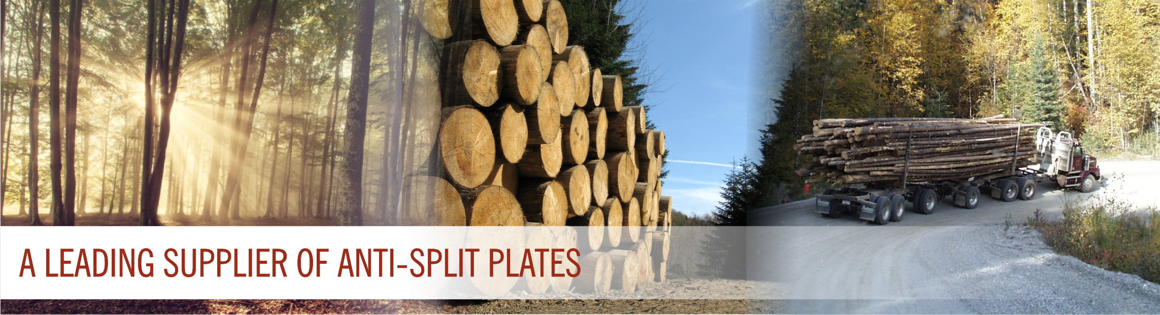A Leading Supplier of Anti-split Plates